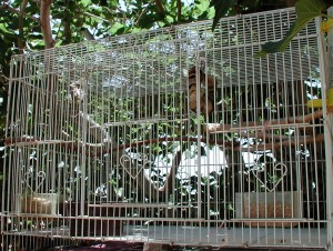 "Bird Cage size 23"" long 16"" wide & 14"" high"