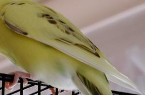 Birds Wing
