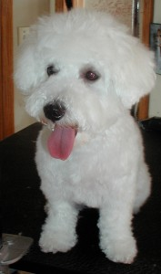 McDuff's After grooming front view