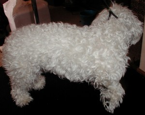 McDuff's Before grooming right side view