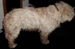 Before grooming right side view