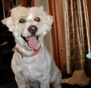 After grooming front view