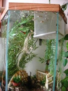 Breeder net in a tank