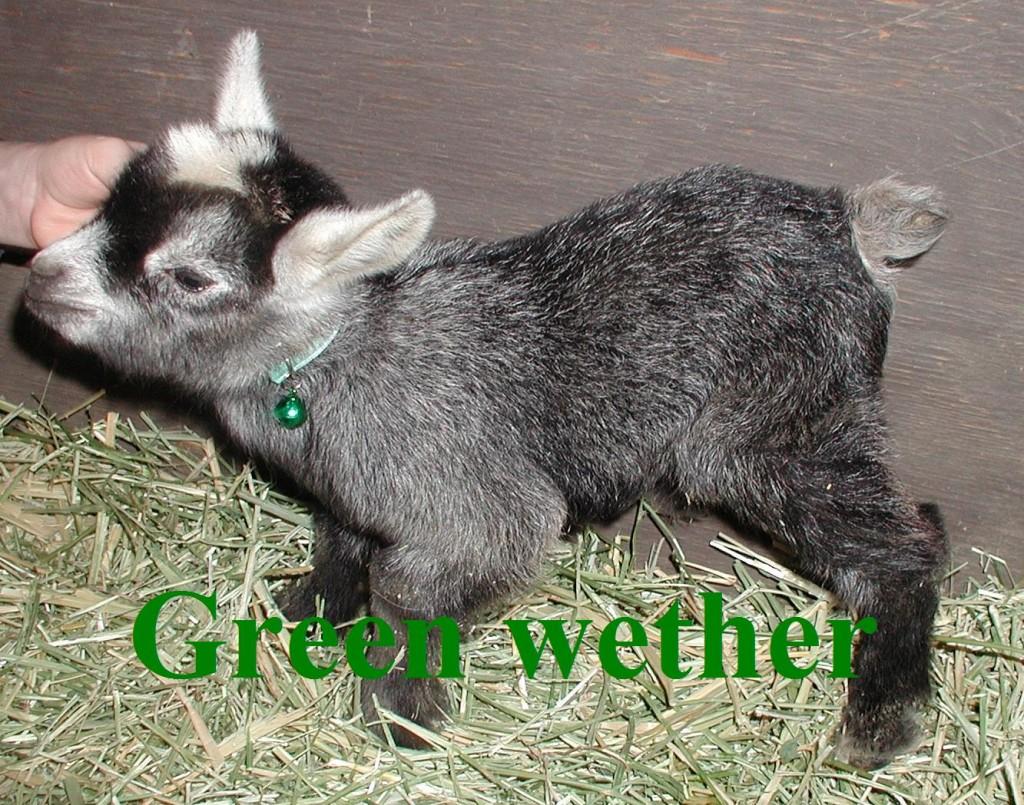 Oreo's 3rd born