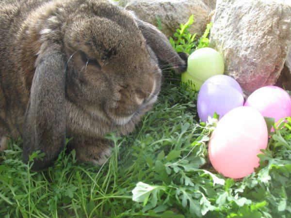 Pet's Name: Bunny