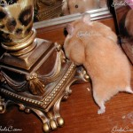 Hamster with stuffed cheecks