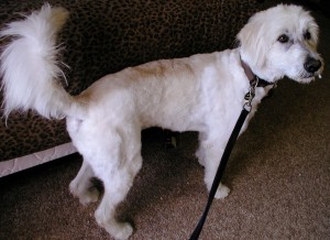 After grooming right side view