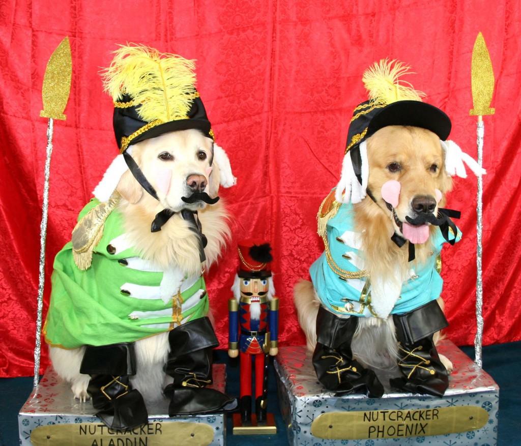 Pets Names: Aladdin & Phoenix