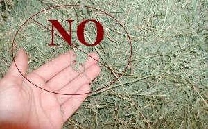 Alfalfa Hay p2