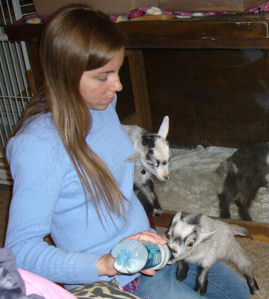 Bottle fedding a pygmy goat