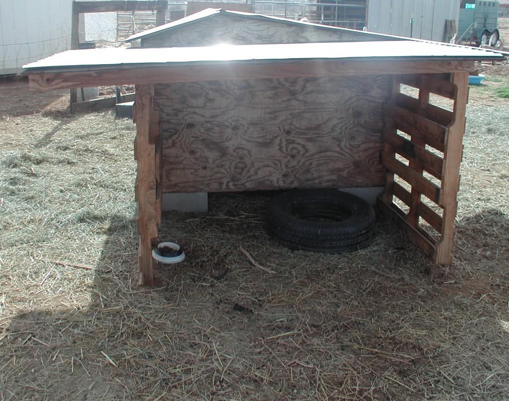 Goat shelter back view
