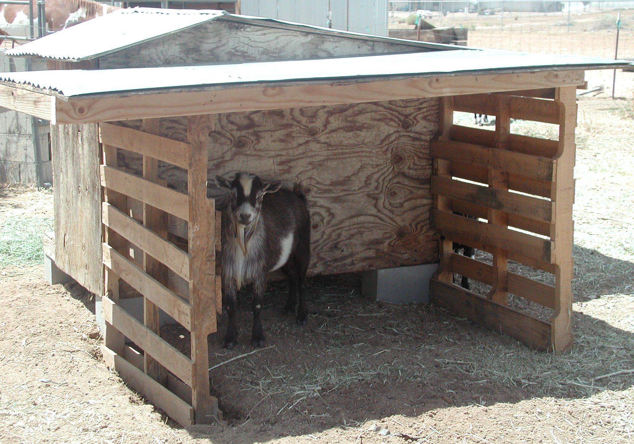 Goat shelter - photo#4