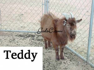 This is Teddy, he is one of our bucks