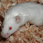 One of my many mice that I owned. 2009