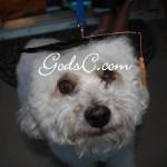 Cody at my graduation 2008
