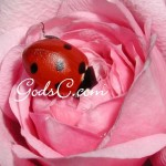 I took this photo of a ladybug in 2009