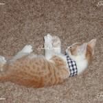 my cat Patrick as a little kitten 2004