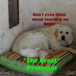The Great Protector!