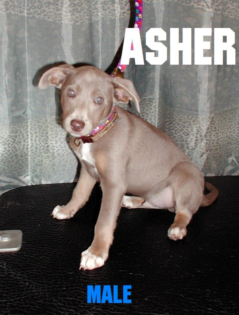 Asher The Puppy
