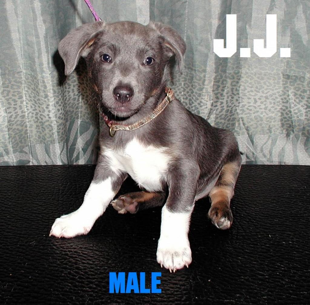 J.J. The Puppy