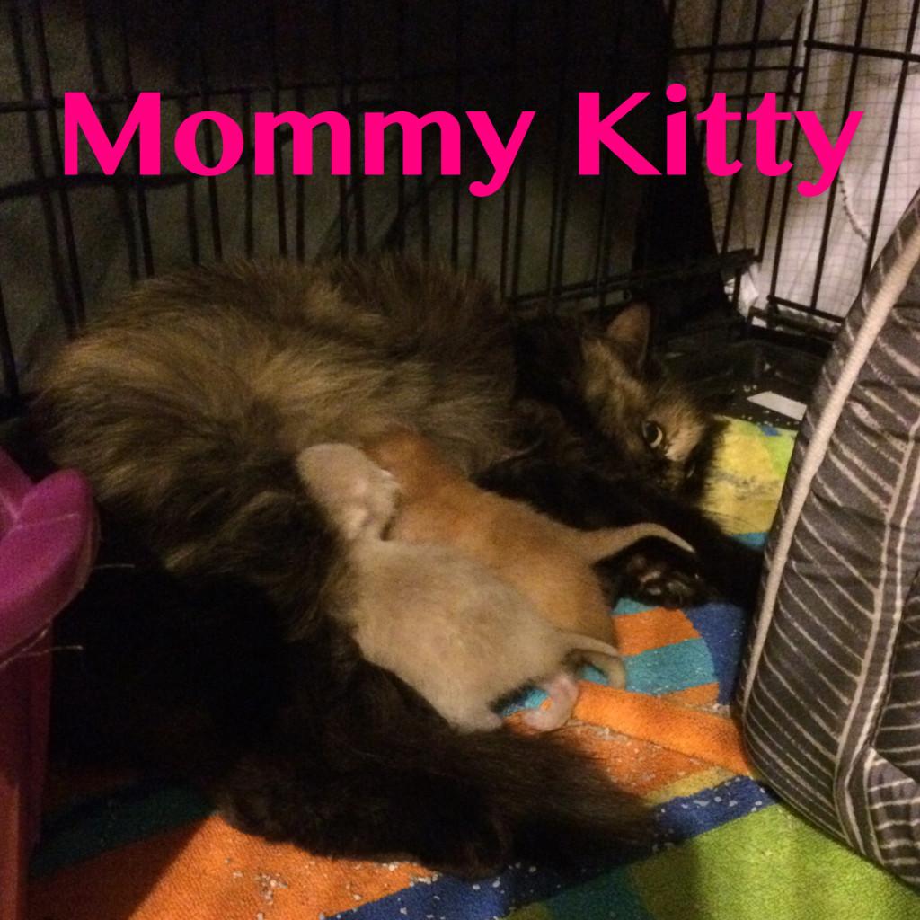 Rescued Cat Fmale Tortoiseshell