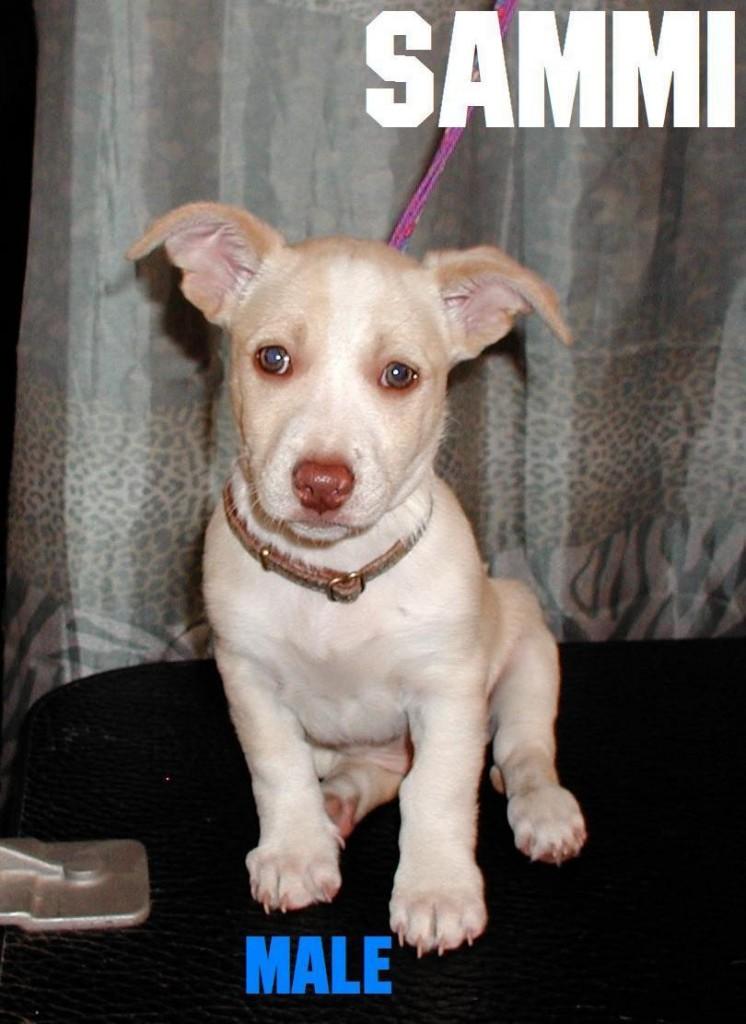 Sammi The Puppy