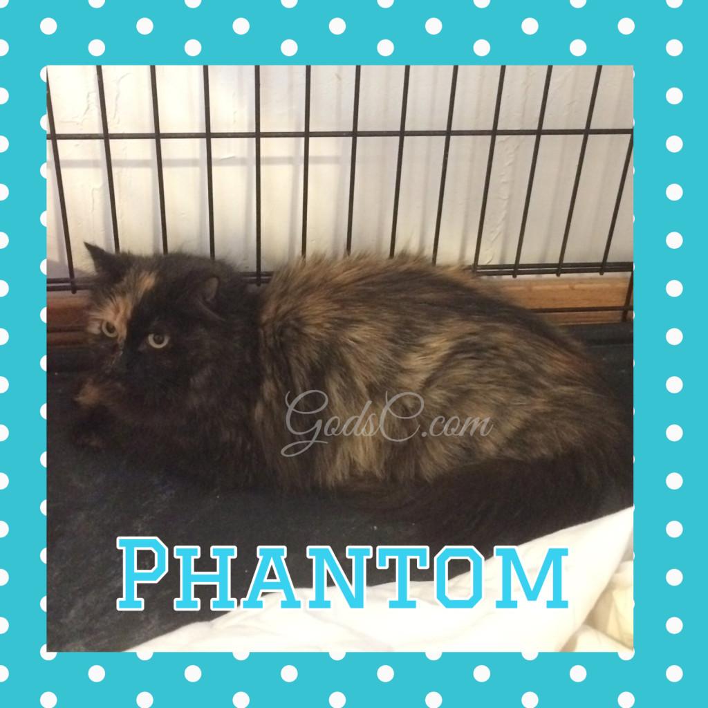 Tortoiseshell Feamle Mommy kitty cat named Phantom
