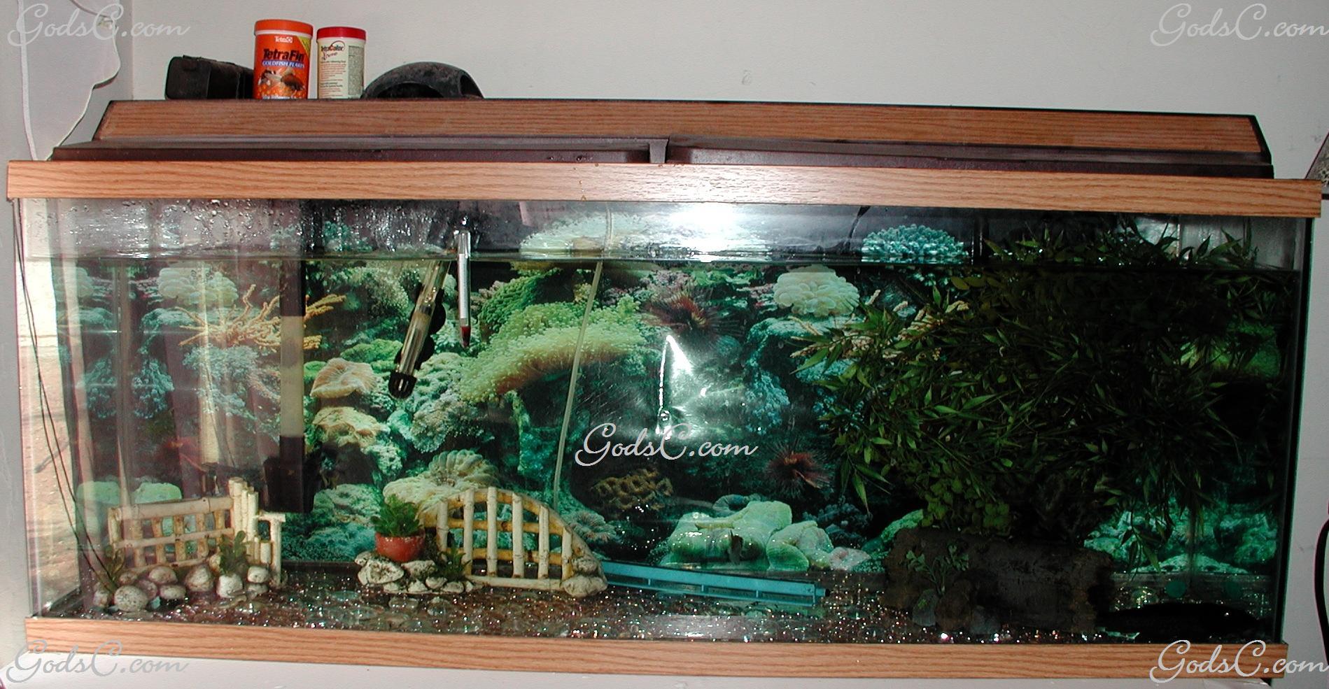 Freshwater fish for tanks - Bible