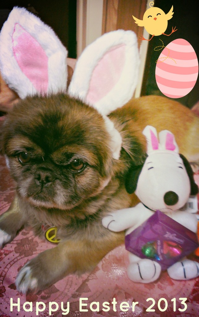 Pets Name: Molly         Breed: Pekingese p1