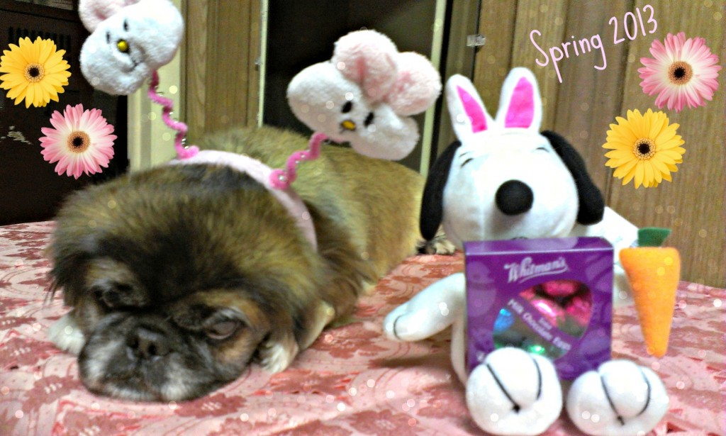 Pets Name: Molly          Breed: Pekingese p2