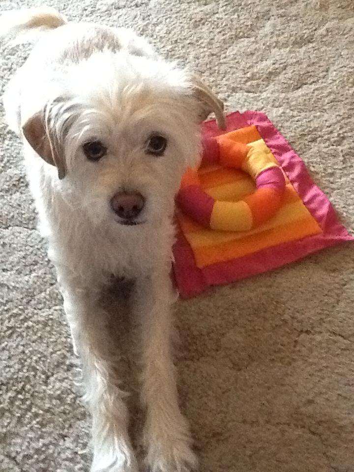Pets Name: Sadie          Breed: Pug-Terrier Mix
