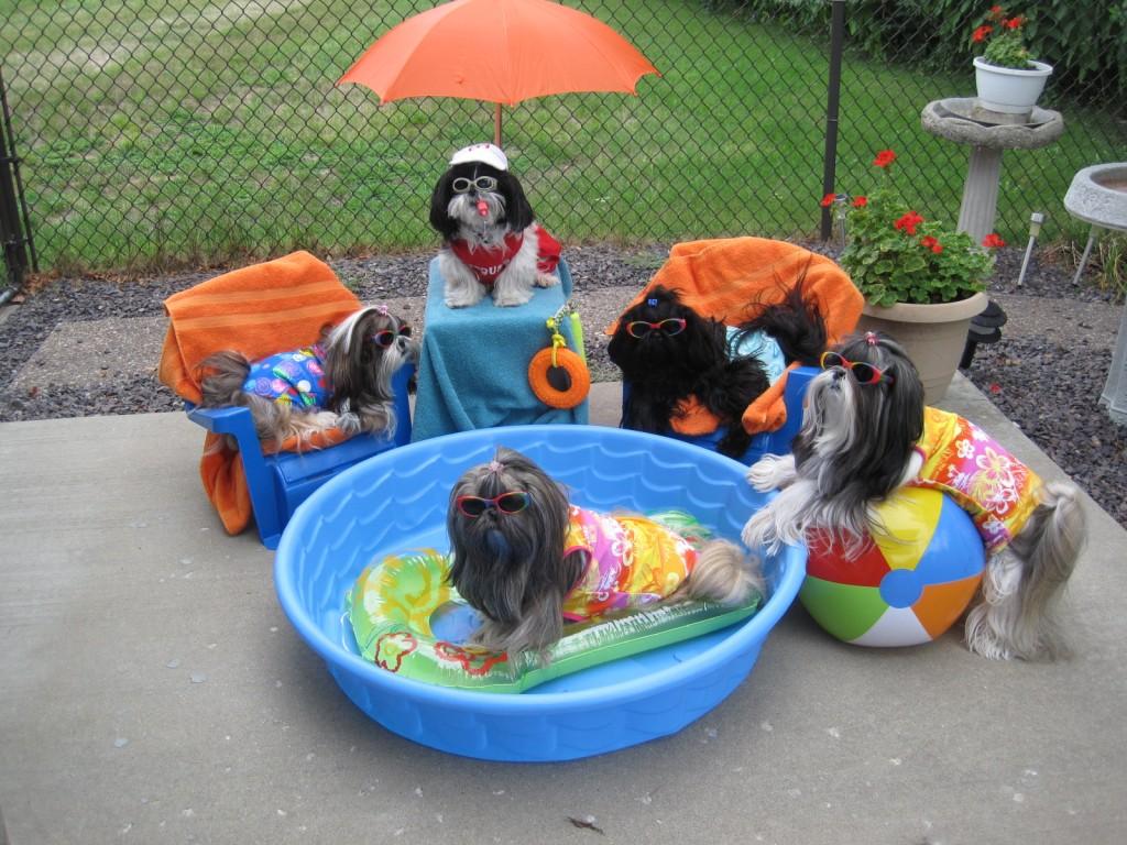 Pets Names: Sophie, Sadie, Cutter, Cassie, & Kippy Breed: Shih Tzu