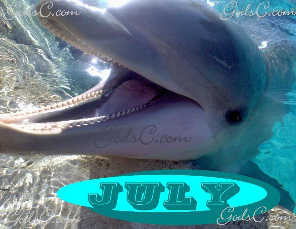 July Dolphin