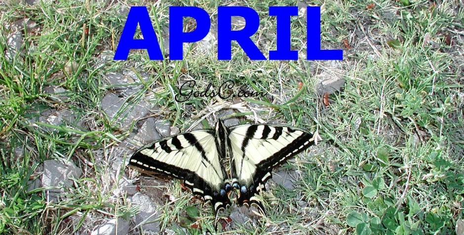 cropped-April-Tiger-Swallowtail-Butterfly.jpg