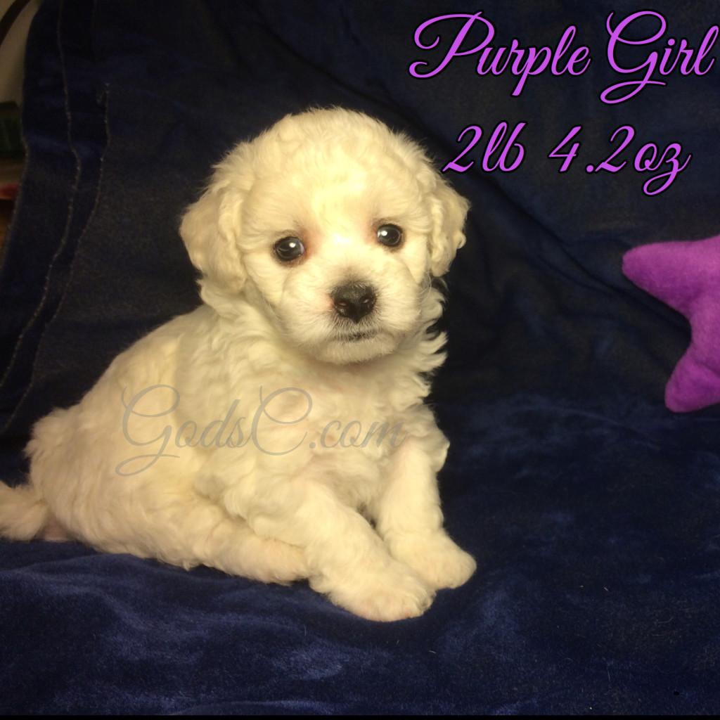 4 weeks old 7-18-16 purple girl