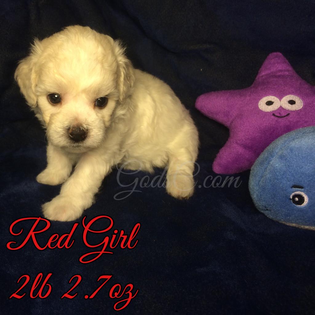 4 weeks old 7-18-16 red girl