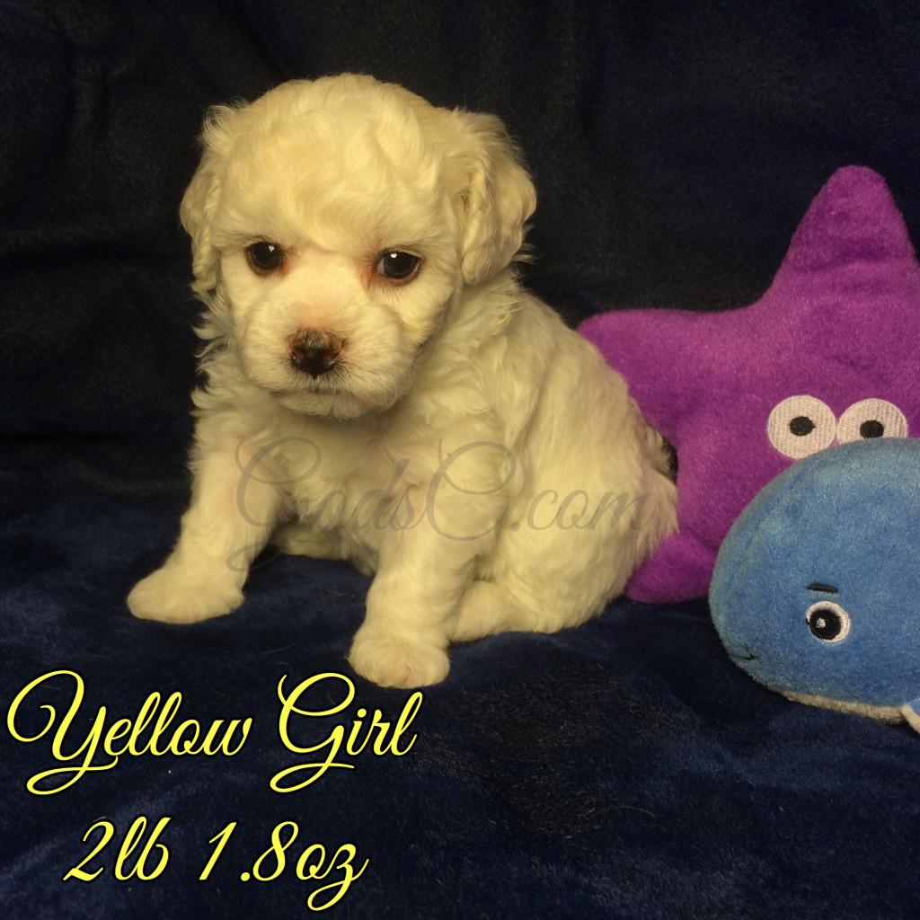 4 weeks old 7-18-16 yellow girl