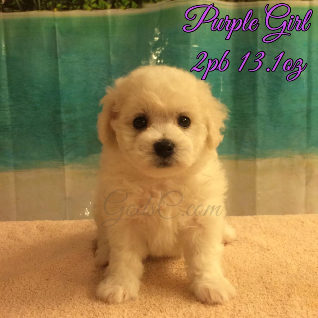 5 weeks old 7-25-16 purple girl