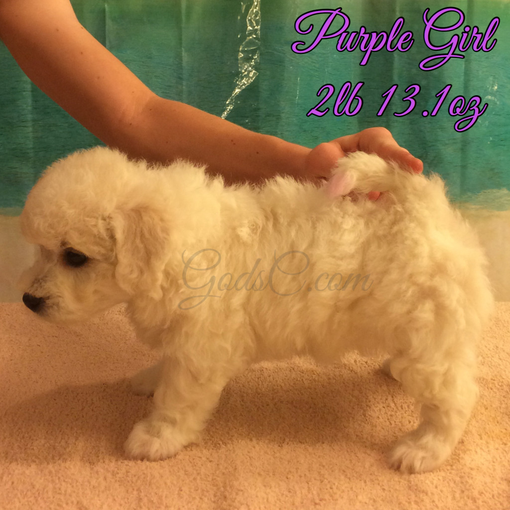 5 weeks old 7-25-16 stacking for the first time purple girl