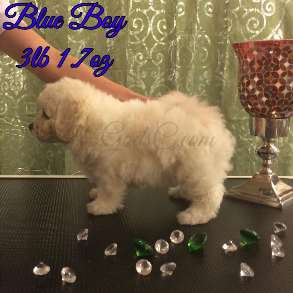 6 weeks old 8-1-16 stacking blue boy