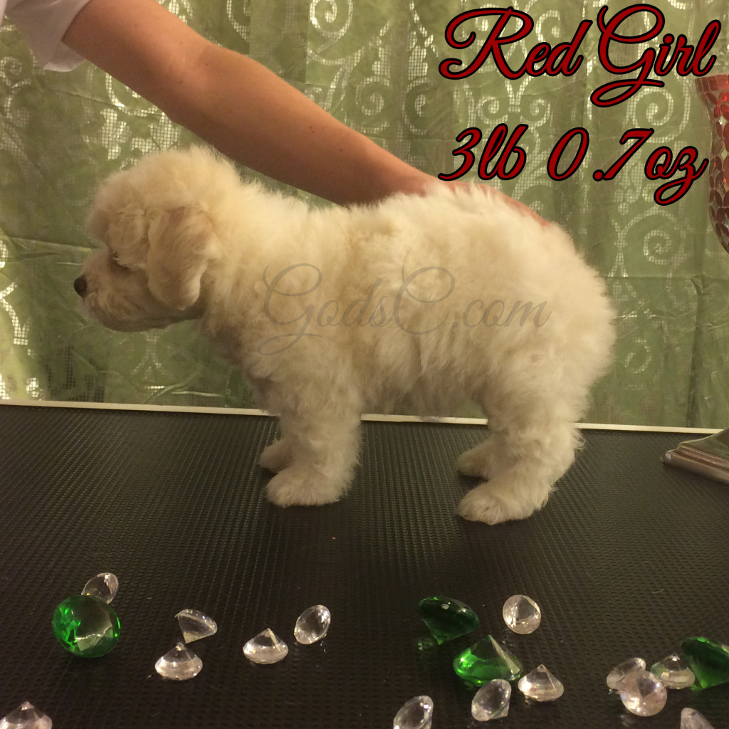 6 weeks old 8-1-16 stacking red girl