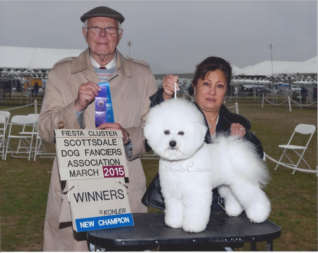 GodsC.com Xerxes' Finished Champion Winners dog in AZ at Scottdales Dog Fanciers Association