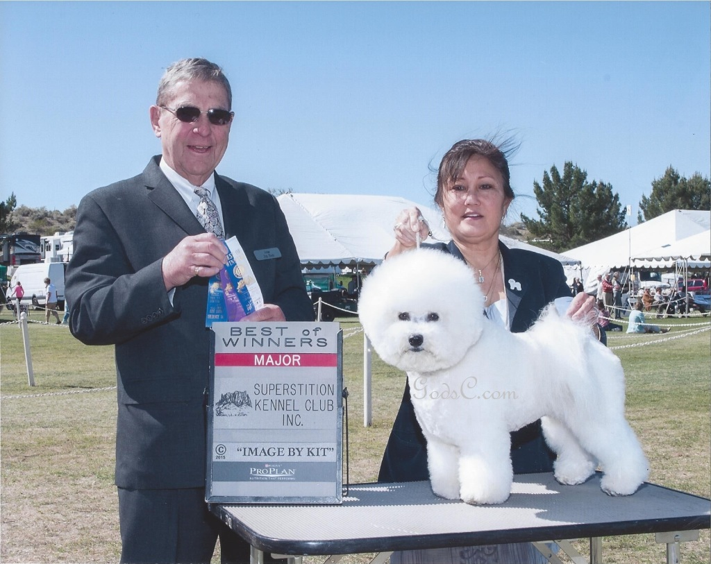 GodsC.com Xerxes' Major Win Best of Winners in AZ at Superstition Kennel Club