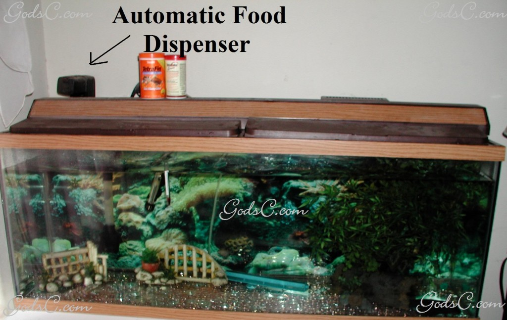Fish tank with Automatic Food Dispenser