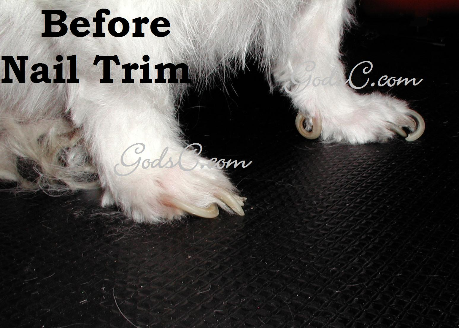 When to trim your dog\'s nails | God\'s Creatures