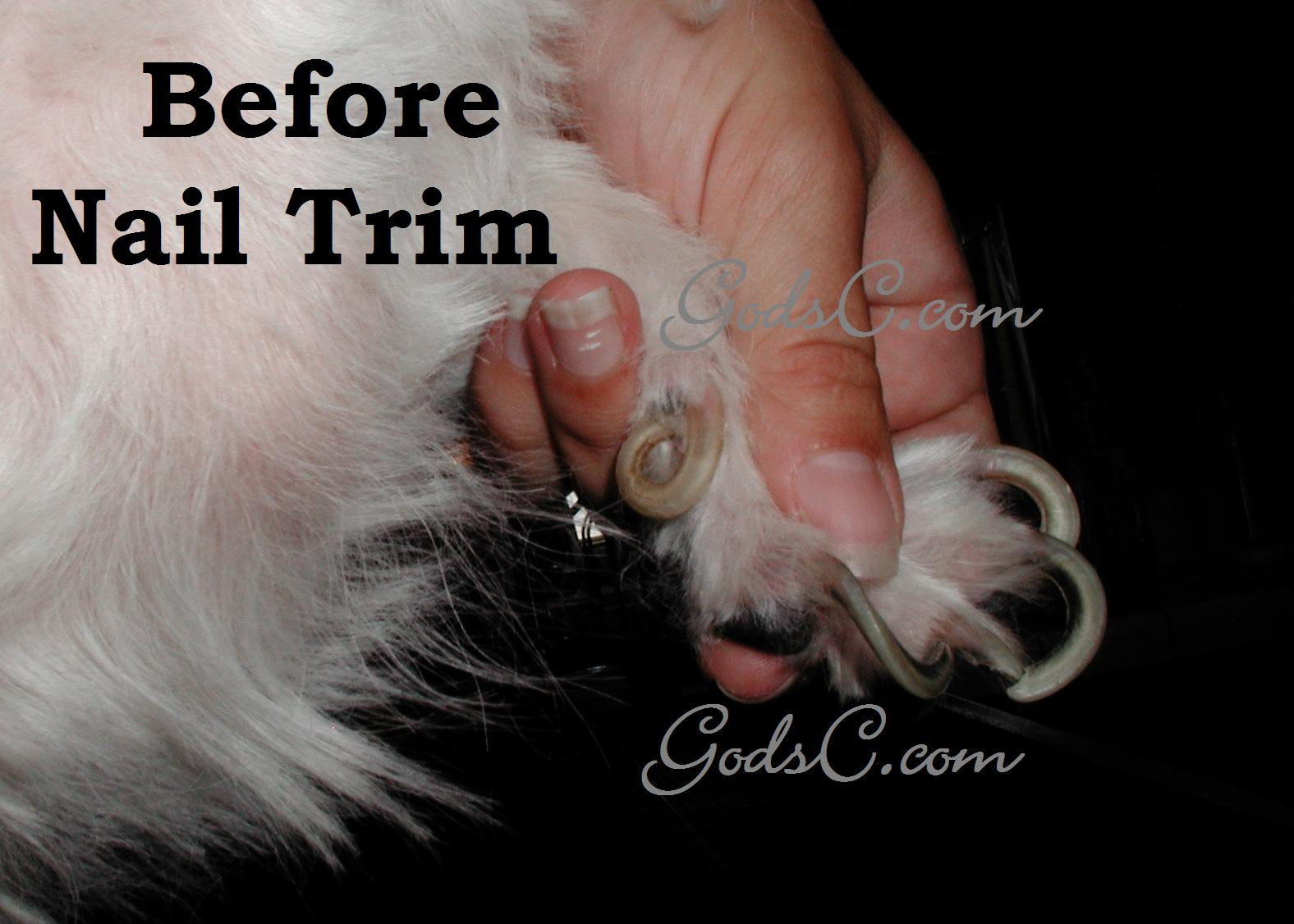 When to trim your dog s nails