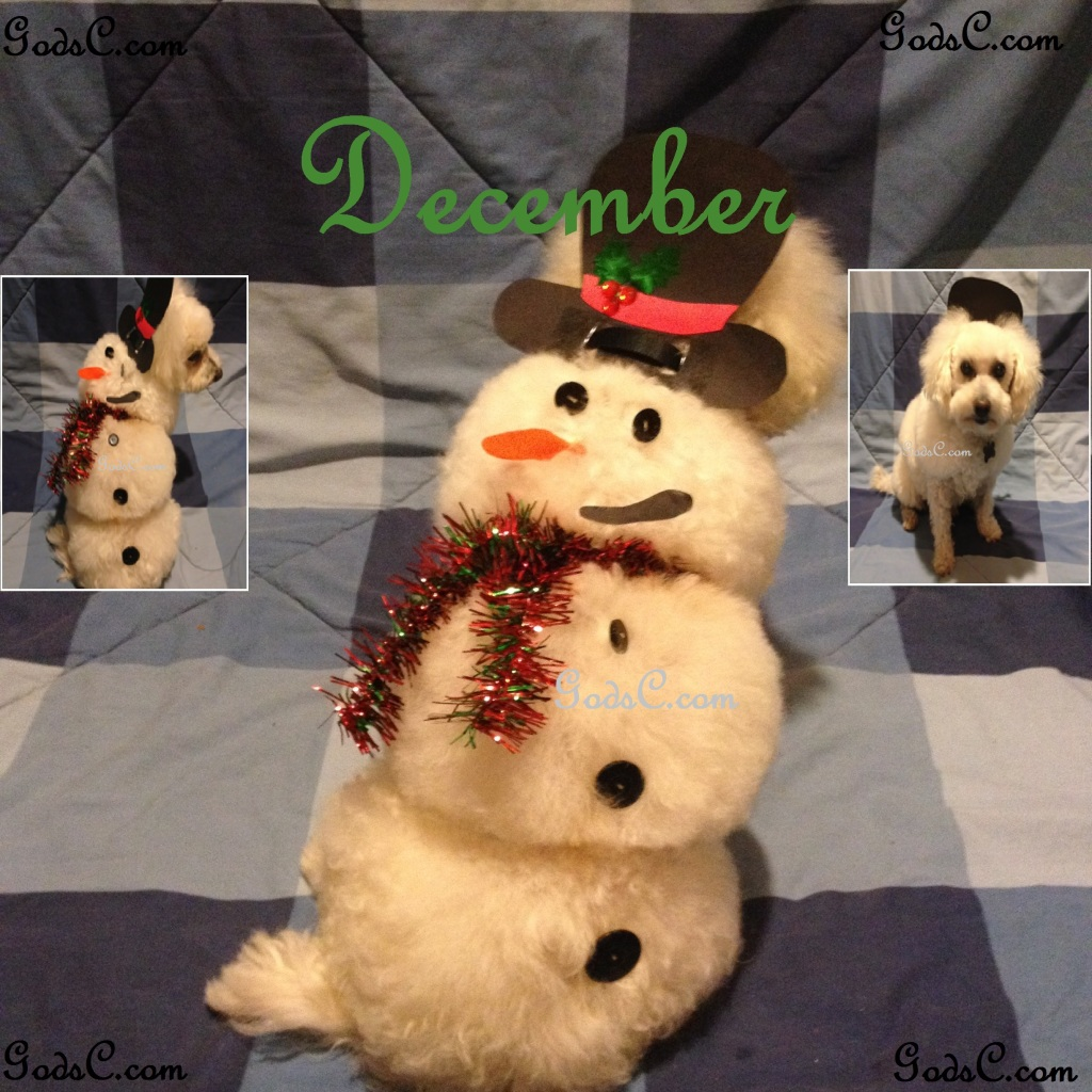 December creative snowman asian flair dog groom