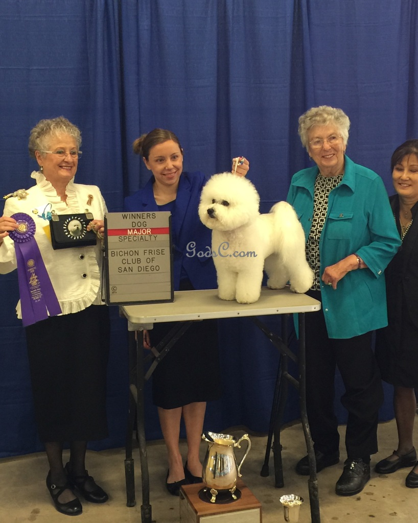 King Xerxes Winners Dog Bichon Frise Specialty 2-20-15
