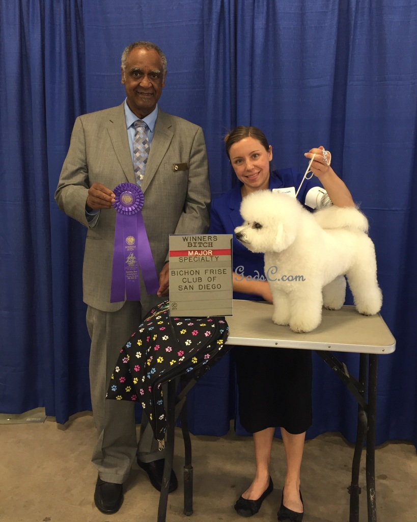 Queen Hadassah Winners Bitch Bichon Frise Specialty 2-20-15